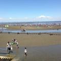 家族で潮干狩りに行こう!関東おすすめ潮干狩りスポット